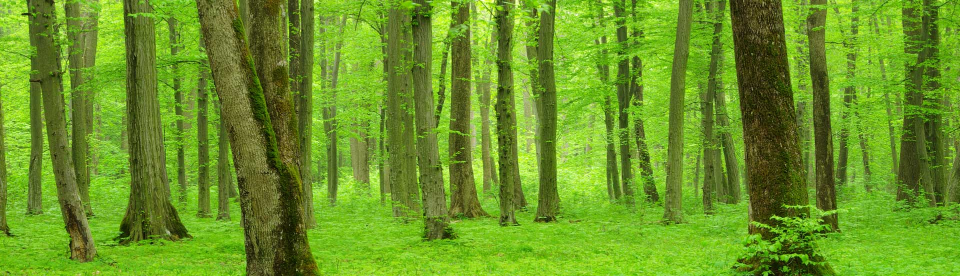 woodsims-renovamos-naturaleza